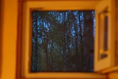 Evening outside the window (grzegorzziętkiewicz) Tags: las wald wood outdoor okno window fenster poland kujawy sonyslta58 2017