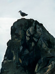 The Seagull and the Rock (Steve Taylor (Photography)) Tags: bird gull seagull blue stone rock texture sumner newzealand nz southisland canterbury christchurch