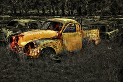 Holden FJ Ute (jatakaphoto) Tags: car ute yellow rusty weathered abandoned dumped wrecking yard neglected fj holden overgrown monochrome bw vintage oldtimer cooma flynns snowy mountains