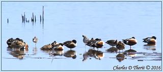 Homelake Waterfowl
