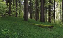 grassland forest (johndifool) Tags: forest grassland green wiese grün moos moss overgrown bewachsen 7dwf
