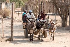 Opuwo donkey cart (10b travelling / Carsten ten Brink) Tags: 1000plus 10btravelling 2016 africa african afrika afrique carstentenbrink himba iptcbasic kaokoland kunene life namibia namibian namibie namibië opuwo ovahimba people places southwestafrica southwest suidwesafrika südwestafrika cart donkey donkeys indigenous mammal region seminomadic south southern southwestern tenbrink