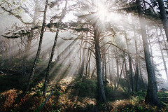 scenes from the pnw, part five (manyfires) Tags: landscape film analog washington pnw pacificnorthwest nature outdoors hike hiking 35mm nikonf100 trees forest olympicpeninsula morning mist fog moody sunlight