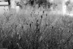 Weeds and wild grass (Night-Sky) Tags: ayamonte andalucía spain es