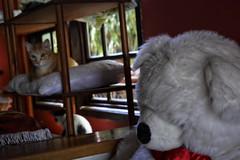 velho urso (agnaldocruz1) Tags: pulúcia urso fofo