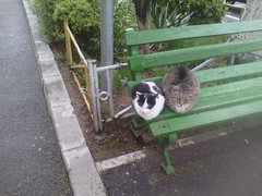 IMG07269 (chicore2011) Tags: tabbies sulking about weather