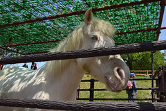 白馬の壁紙プレビュー