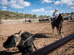 Roping (_bobmcclure_) Tags: roping rodeo cowgirl calf arizona wickenburg cowpunchers