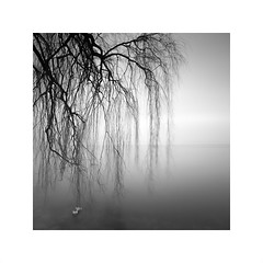 the quiet sound of life (ArztG.|Photo) Tags: fine art quiet sound life water tree square love atmosphere austria arztg|photo
