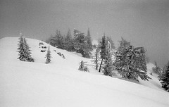 Stormy Record Ridge (JeffAmantea) Tags: seven summits trees tree forest relax solitude serenity landscape rossland range trail kootenays kootenay bc british columbia canada film analog vintage nikon fe2 24mm 28 ilford xp2 super 400 iso grain contrast escape ski skiing touring tour backcountry back country snow snowing cold outdoor outside explore adventure winter wonderland