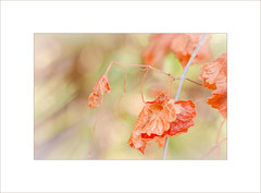 Turning Summer ~ (FLGalleria) Tags: leaves colors pastel soft dreamy ethereal turning dof nature canon bokeh sunlight summer magicunicornverybest ie stilllife macro