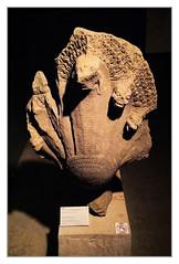 Siem Reap K - Angkor National Museum - Khmer Art Naga