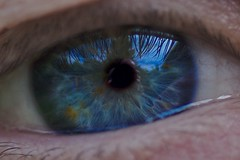 Blue Eye (G. Lang) Tags: blue œil import07052017 eye eyes blau macromondays sonyilce7m2 tamronaf90mm128macro11 sonyalpha7ii macro makro bleu auge sonya7ii