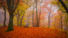 Autumn [Explored] (Ulmi81) Tags: autumn herbst laub blätter leafs baum bäume tree trees bank bench neben mist fog red yellow rot gelb herbstfarben colours colourful farbenfroh blaubeuren ulm sonderbuch schwäbische alb schwaben
