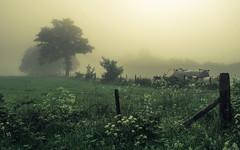 Eifel Mist (Netsrak) Tags: baum bäume eu europa europe landschaft natur nebel wald fog landscape mist nature tree trees woods rheinbach nordrheinwestfalen deutschland de eifel cow cows kuh kühe