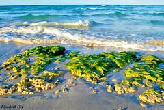 Tunisia 158 (Elisabeth Gaj) Tags: elisabethgaj tunisia afryka travel sea water natur nature beach