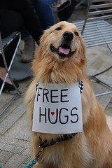 Free Hugs (swong95765) Tags: dog canine sign hugs free golden retriever cute awe irresistible