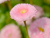 One Fine Day (sniflet) Tags: spring zámekprůhonice macroflowers may flowers awalkinthepark nikkor40mm28 macroshots