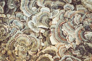 New Fungi