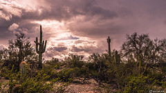 Arizona Desert (Ken Mickel) Tags: arizona cacti cactus clouds cloudy desert estrellla goodyeararizona landscape landscapedesert outdoors plants saguaro topaz topazadjust topazdetail weather nature photography