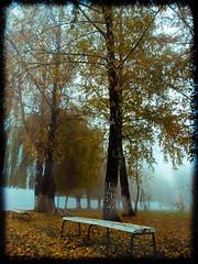 Sometimes the fog sings. (VasiRed Bull 2013) Tags: fog nature natural nobody fresh forest frozen green golden travel twilight time trees ready rest