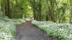 Wenlock edge woods walk (Happy snappy nature) Tags: wenlockedge woods pretty beautiful nature outdoors shropshire landscape