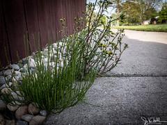 135/365 - Weeds