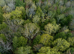 Green Energy (hessamt) Tags: green yellow red springfoliage aerial canopy dendrites arbor trees oronomaine djiphantom4proplus above renewal detail buds pollen landscape nature scenic