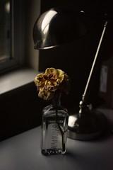 """Remains of the Rose"" (milmonfharrison) Tags: 50mmf18 50mm lowlight dyingrose rose flower dark evening"