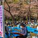 Hanami at Ueno Park