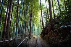 Fushimi Inari-Taisha (Bill Thoo) Tags: fushimiinaritaisha fushimi kyoto japan inaritaisha shrine temple taisha gates landscape bamboo path travel nature exotic sony a7rii ilce7rm2 zeiss batis 18mm 伏見稲荷大社 京都市