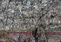 Quartz Crystals (Ron Wolf) Tags: chinleformation earthscience geology mesozoic nationalpark paleontology petrifiedforestnationalpark quartz triassic log mineral mineralogy nature petrifiedwood arizona