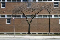 High school and trees (jer1961) Tags: toronto bishopmarocco thomasmerton highschool bishopmaroccohighschool thomasmertonhighschool tree trees windows