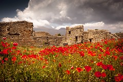 Pompeii Poppies (Explored) (Sandy Sharples) Tags: pompeii italy ruins poppies wildflowers may