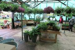 2017 Rowayton Gardeners Plant Sale (caboose_rodeo) Tags: 7141 plants rowaytonct norwalkct volunteers greenhouse pottingshed