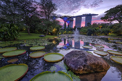 MARSH (ChieFer Teodoro) Tags: canon 1635mm 6d gitzo gt2541 arca swiss z1 lee filter graduated neutral density landscape cityscape sunset marina bay sands supertree singapore gardens pond lily marsh
