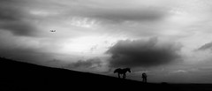 Under the cloud (mexou) Tags: horses cloud bw plane widdebierg luxembourg
