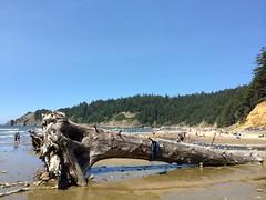 Short Sands (Sam Beebe) Tags: shortsands oswaldweststatepark beach oregon surfing