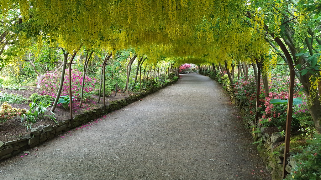 Stunning The Worlds Best Photos Of Arch And Laburnum  Flickr Hive Mind With Fascinating  Dave Owen Uk Tags Bodnant Gardens Laburnum Arch With Agreeable Identify Garden Flowers Also Garden Border Edging Stone In Addition Naughty Garden Gnomes And Kensington Rooftop Gardens Menu As Well As Garden Ceramics Sculptures Additionally Covent Garden Londra From Hiveminercom With   Fascinating The Worlds Best Photos Of Arch And Laburnum  Flickr Hive Mind With Agreeable  Dave Owen Uk Tags Bodnant Gardens Laburnum Arch And Stunning Identify Garden Flowers Also Garden Border Edging Stone In Addition Naughty Garden Gnomes From Hiveminercom