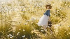 field of daisies (wing_nicole) Tags: volks doll 霧雨魔理沙 dollfie dream daisy デイジー 雛菊 flower