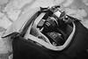 (halagabor) Tags: bnw blackandwhite nikon nikkor film camera bag camerabag retro vintage fg20