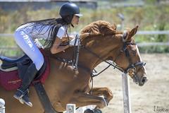 _DSC5045 (J. Alonso Photography) Tags: 2017 70200mm d5 abril april baleares balearic caballo caballos deporte deportes espuig españa horse horses ibiza nacional national nikon spain sport sports