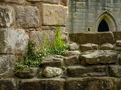 Colonised 2 (tubblesnap) Tags: fountains abbey national trust studley royal stone stonework ruins coolnised