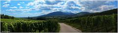 panorama erlenbach (entre soultz et jungholtz) (jamesreed68) Tags: erlenbach vignoble paysage nature panorama 68 alsace montagne hautrhin france arbres forêt vieilarmand soultz jungholtz kodak easyshare c183