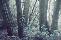 blue woods (WoMooMoW) Tags: woods trees blue colours