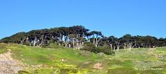 DSC_0288 (rachidH) Tags: scapes views pacific ocean sealrocks cliffhouse sutro baths tide lowtide lobos pointlobos oceanbeach sanfrancisco sf sanfran california rachidh nature