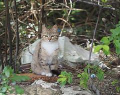 Our street cat (Ciddi Biri) Tags: cat kotek kedi m43tukiye omdem10 olympus60mmf28 animal pet