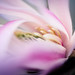 Magnolian trädgårdens skatt