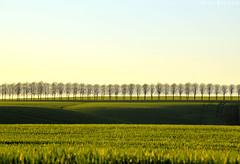 green fields (Neal J.Wilson) Tags: green fields trees farming landscape denmark danishlandscapes danish jutland jylland nordic scandinavia hills silhouette spring wheat color