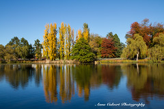 Autumn colours, Canberra (Anna Calvert Photography) Tags: australia canberra lakeburleygriffin travelphotography autumn autumncolours landscape landscapephotography nature trees water reflections colours